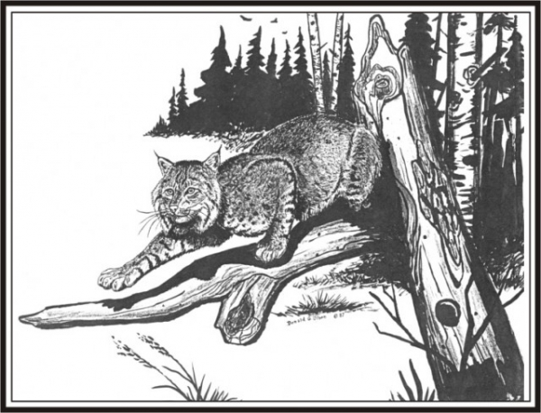THE BOBCAT Pencil 1987