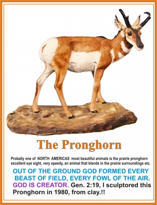 The Pronghorn 1980
