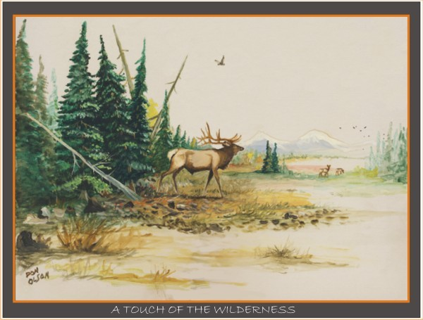 A TOUCH OF WILDERNESS ELK