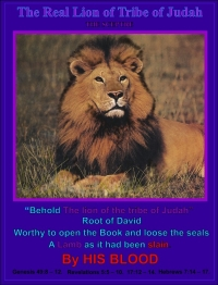 The Real Lion of The Tribe of Judah