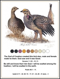 The Sharptailed Grouse
