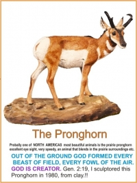 THE PRONGHORN SCULPTOR 1980
